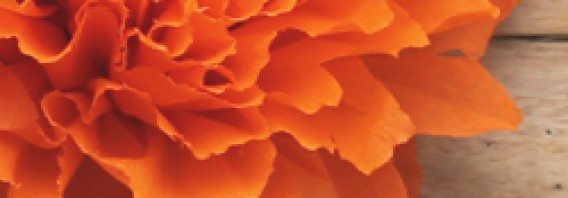 Flores de papel mexicanas video